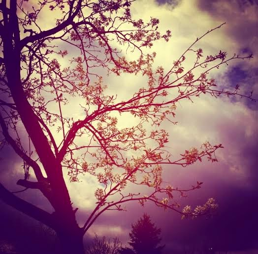 Trees were blooming...