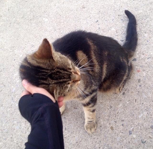 A new kitty friend