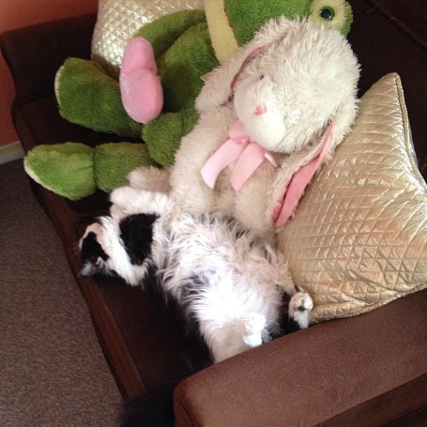 Chloe's snuggle spot