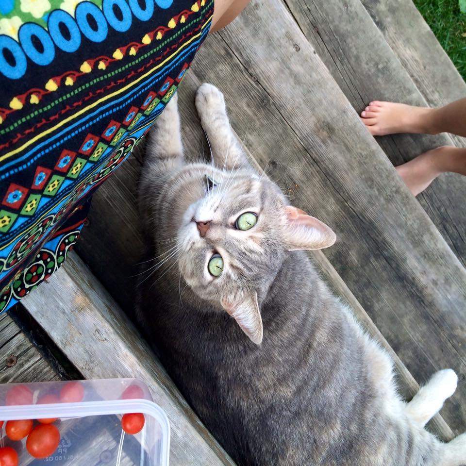 My new kitty friend :)