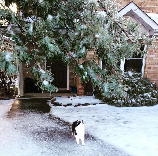 Chloe eyeing the branches that fell a few feet from a crazy ice storm.