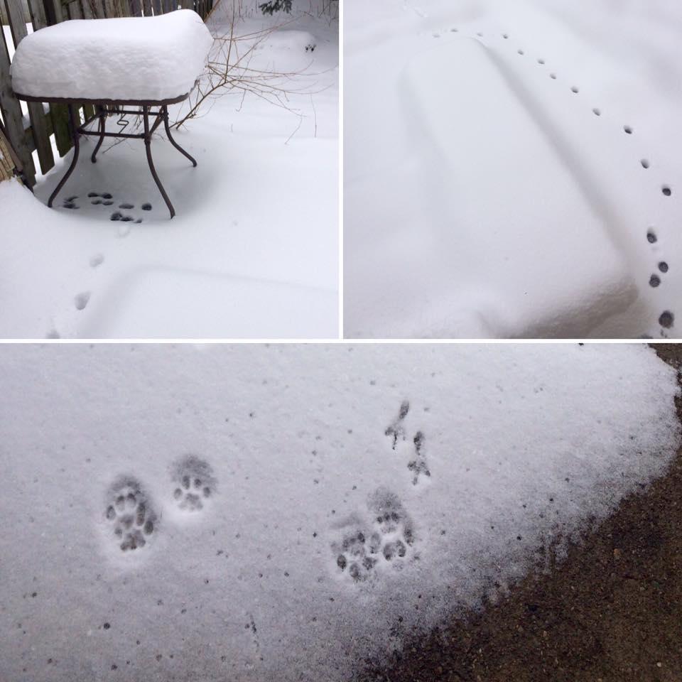 Chloe's snowy adventure