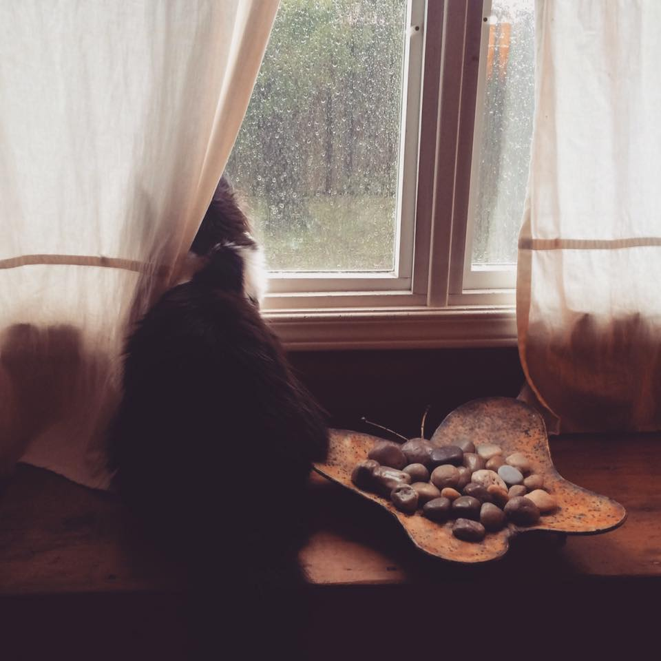 Watching the rain with Chloe