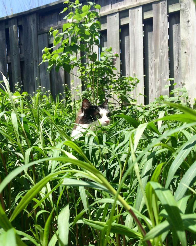 Peeping Chloe