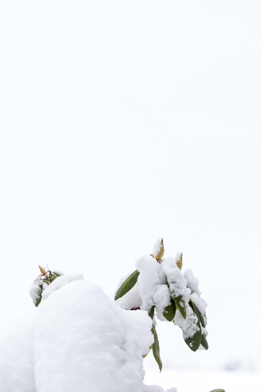 Snow_Jan17_6295.jpg