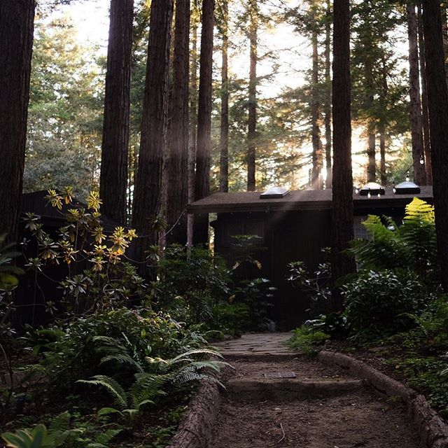 Bye forever. I'm going to live in this Airbnb. In the woods. And sleep in the ferns and eat fresh picked oranges. Okay. Jk. But I think I found my new retirement plan! :)