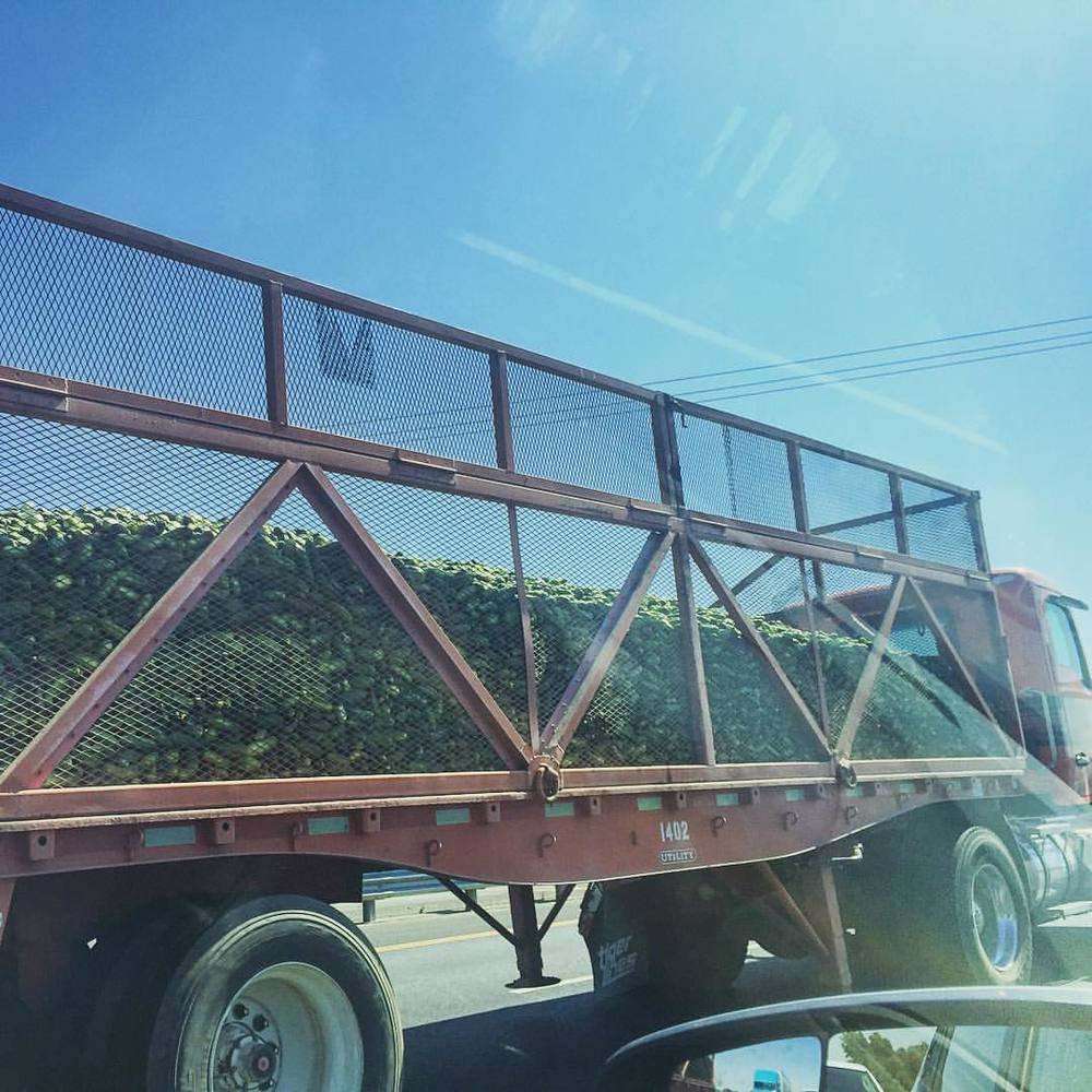 A huge truck of #cucumbers !  (at City of Sacramento)