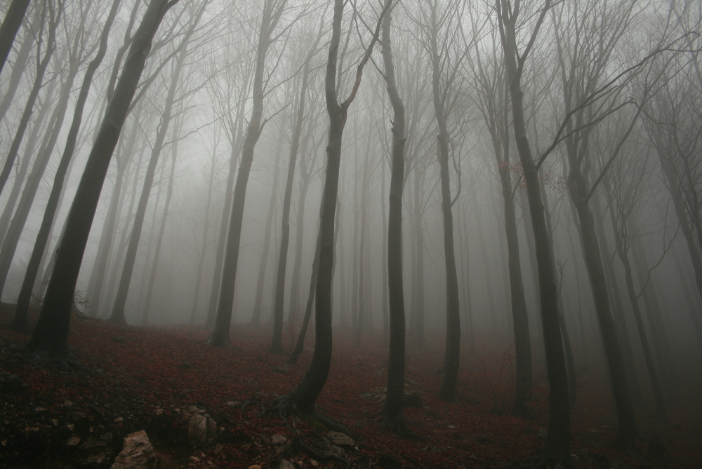 foggy-forest.jpg