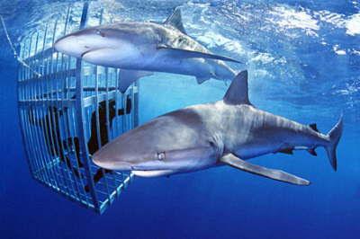 cagediving.jpg