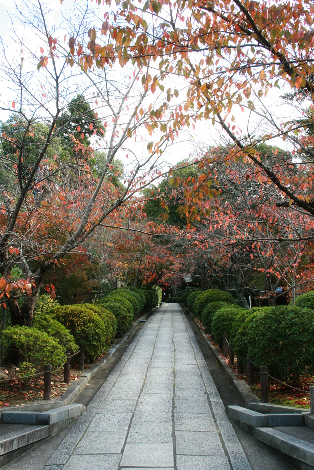 One of the many charming walkways through Kyoto.
