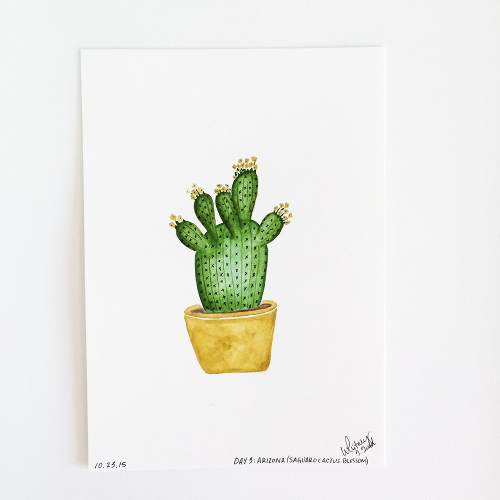 50 Day State-themed Design Challenge via Jitney's Journeys // Illustration and Gouache Paintings by Whitney Todd [Arizona - Saguaro Cactus Flower]