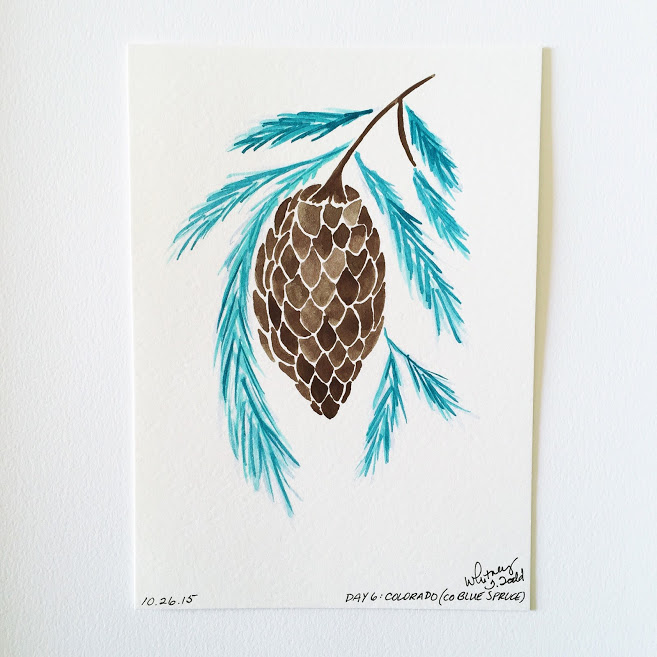 50 Day State-themed Design Challenge via Jitney's Journeys // Illustration and Gouache Paintings by Whitney Todd [Colorado - Colorado Blue Spruce]