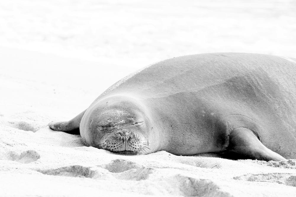 Monk Seal.jpg