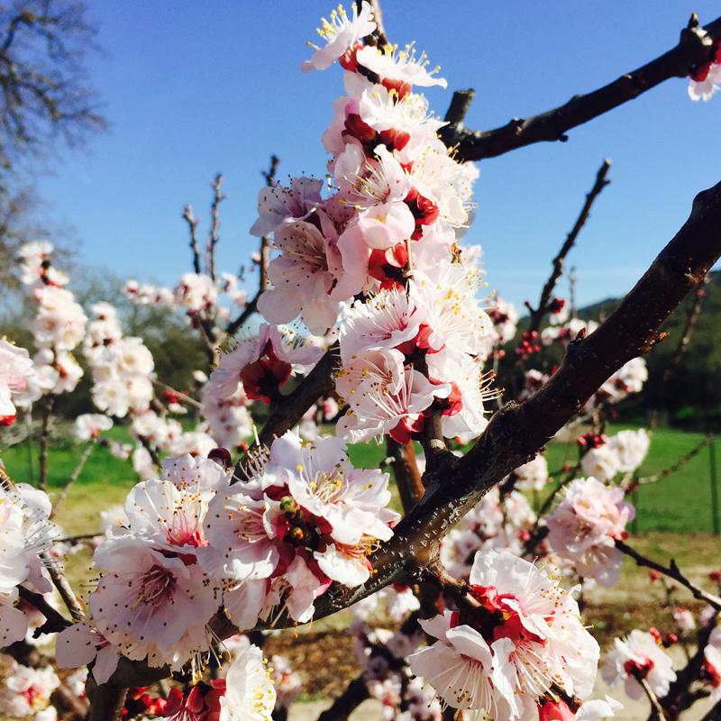 Spring blooms at RDA