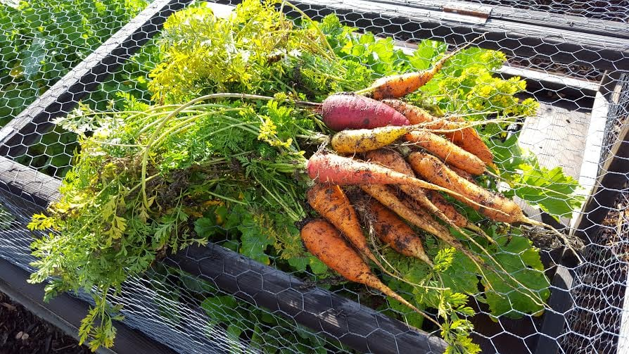 carrots bundle.jpg