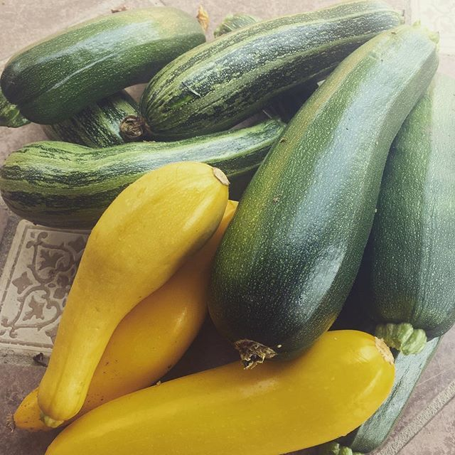 #zucchinioverloadcomingsoon #CAfarmstay#zucchiniideas