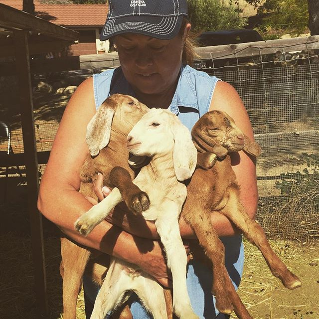 #newkidgoats#alldoes#cafarmstay#nacimientovacationrental #pasoroblesvacationrentals #sleeps12