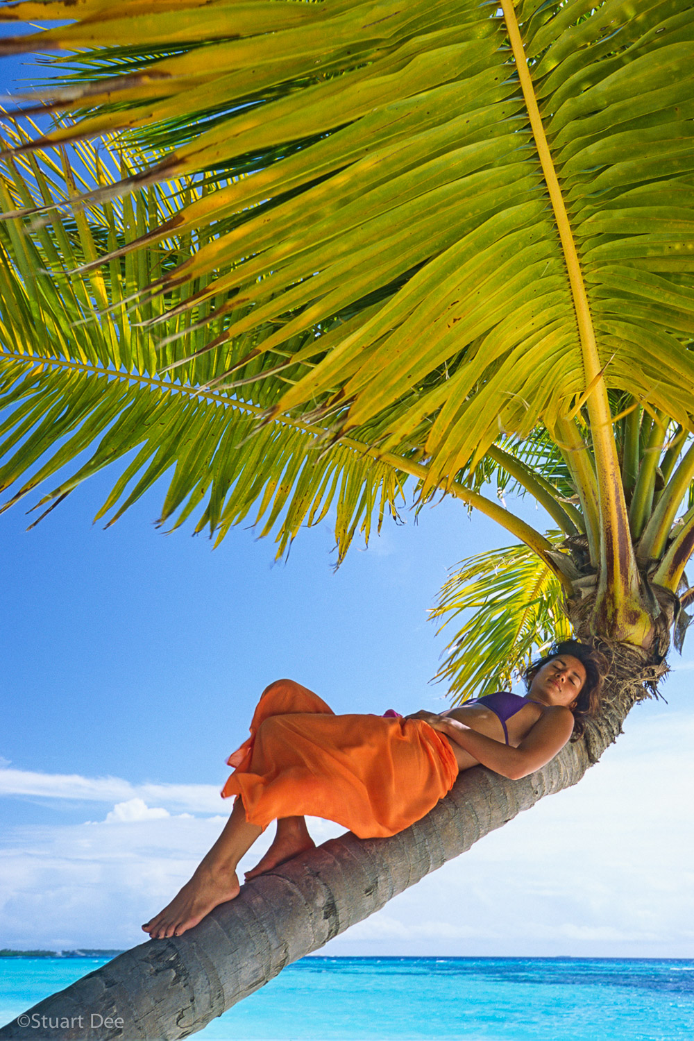 Young woman resting on leaning palm tree, Maldives R