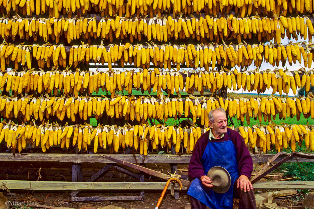 Man with corn on racks, Slovenia   R