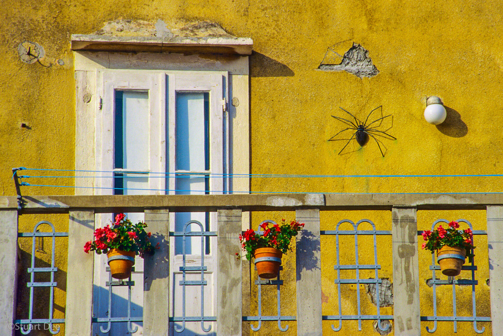 Spider on wall, Piran, Slovenia