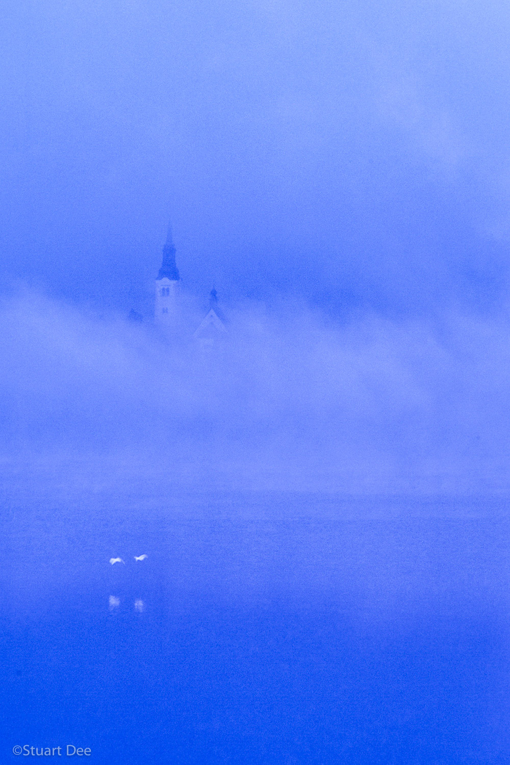 St. Mary's Church, Bled Island (Blenjski Otok), Lake Bled, Bled, Slovenia, in fog and mist, with swans in flight