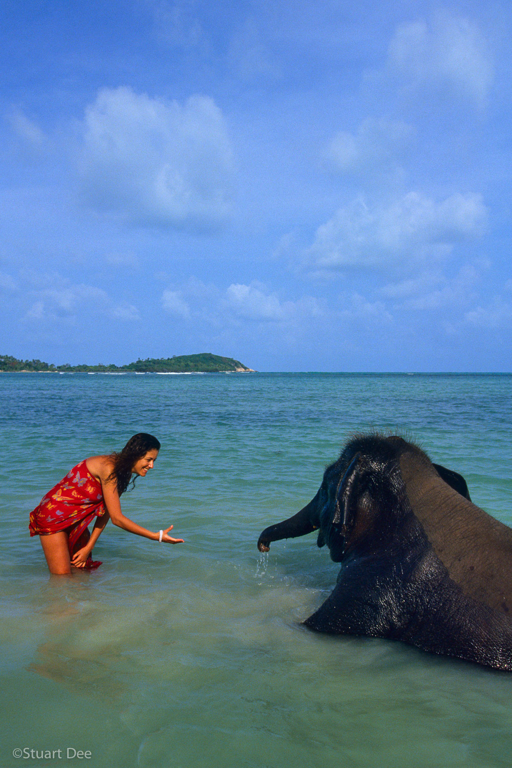Young woman interacting with baby elephant, Chaweng Beach, Samui, Thailand   R