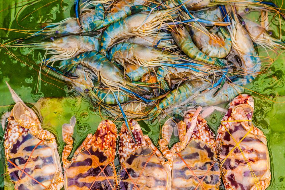 Fresh crab and prawns, Pratu Chiang Mai market, Chiang Mai, Thailand
