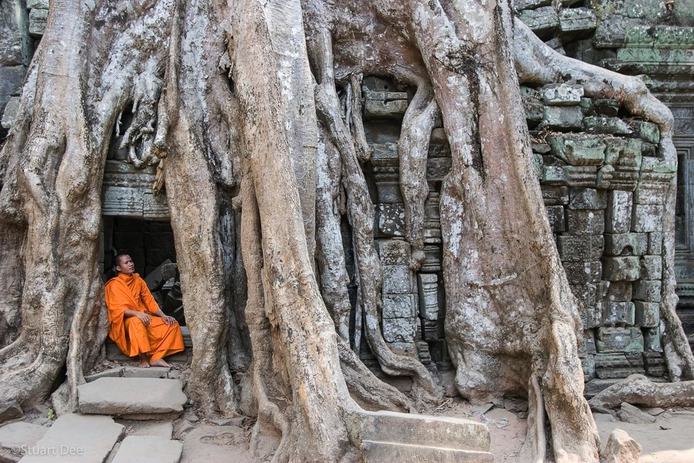 Monk meditating, under large tree growing over temples, Ta Prohm, Angkor Wat, Cambodia