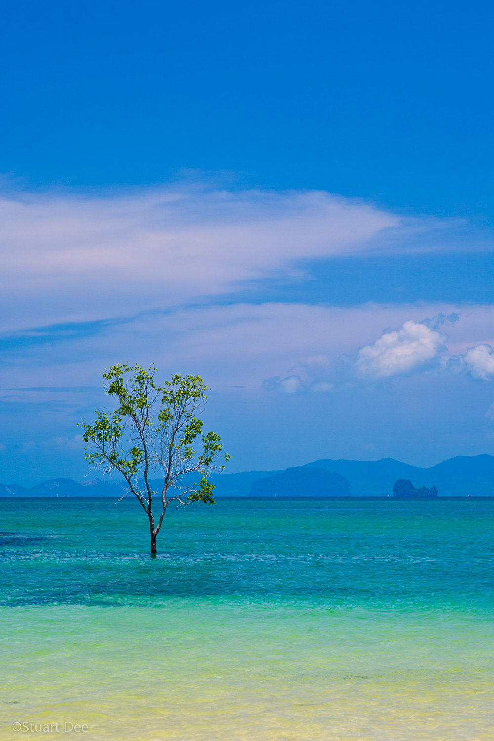 Lone tree growing in the middle of the sea, Krabi, Krabi Province, Thailand