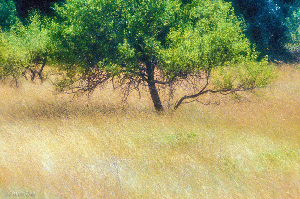 Tree, Provence, France