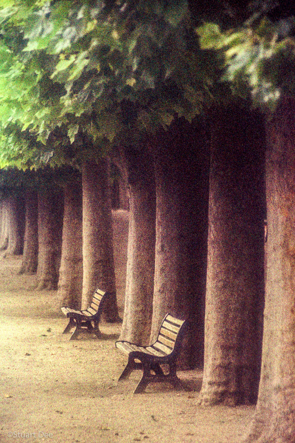 Trees And Benches, Jardin des Plantes, Paris, France
