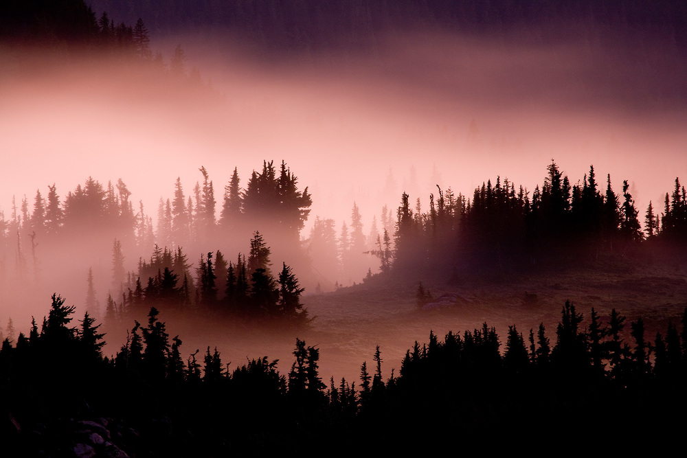 Landscape: Clouds hover through trees and mountains at sunset, Spary Park, Mt. Rainier National Park