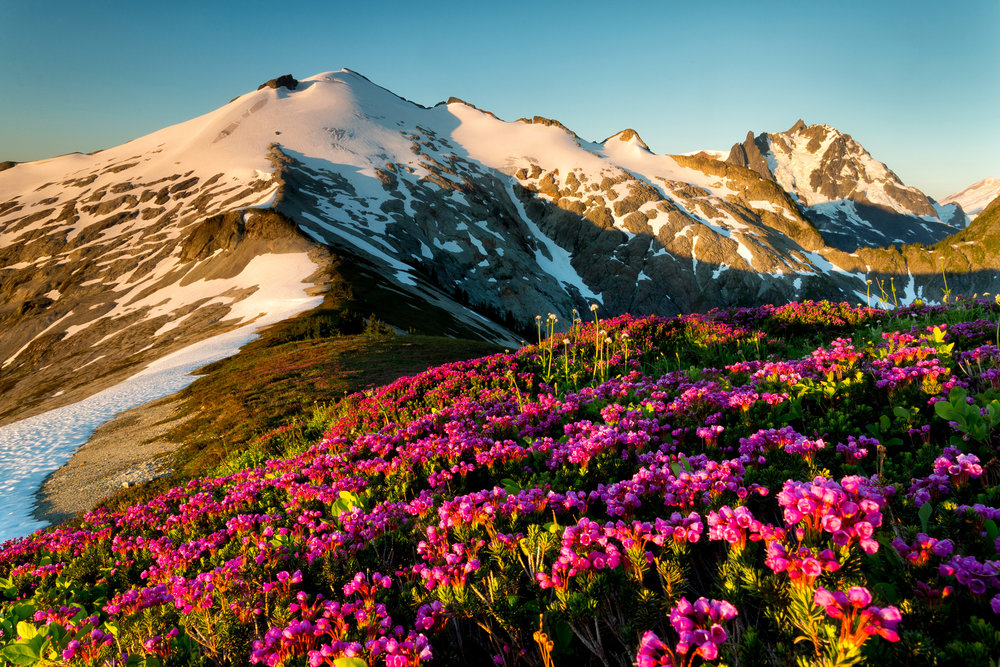 Landscape: Mt. Ruth, Mt. Shuksan and wild heather at sunrise, Mt. Baker Wilderness, Washington
