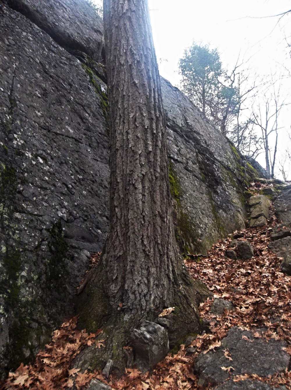 Way to the top! How long has that tree been growing there? And how can anything grow on the surface of a rock? Michelle Geffken, 2014