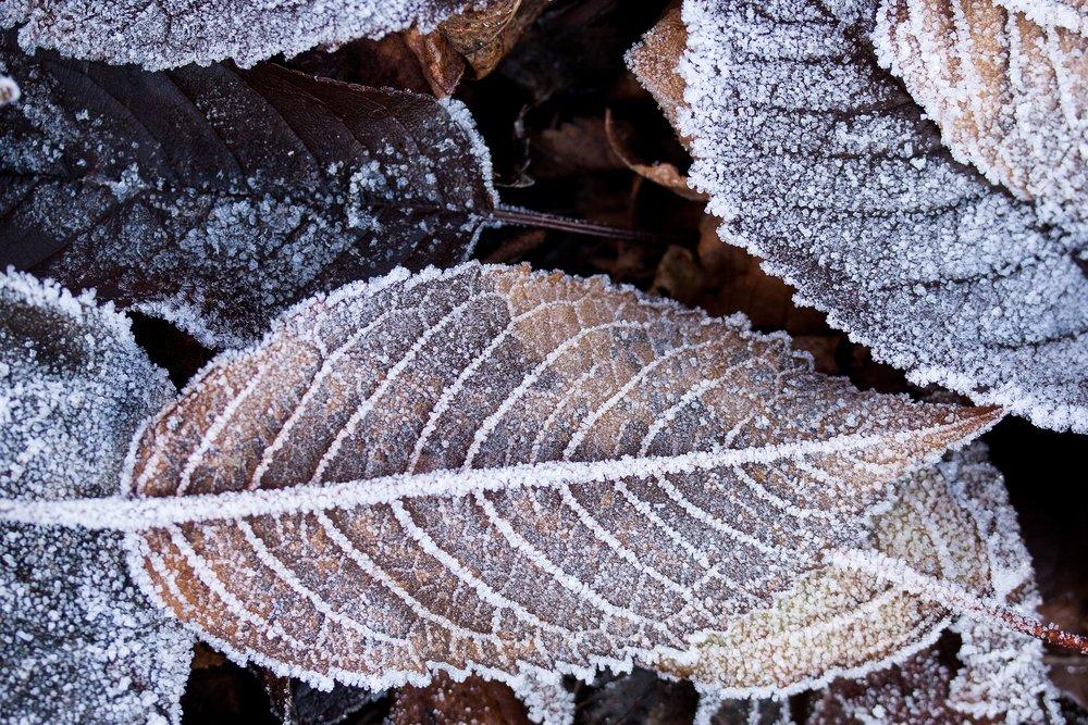 winter-223423.jpg
