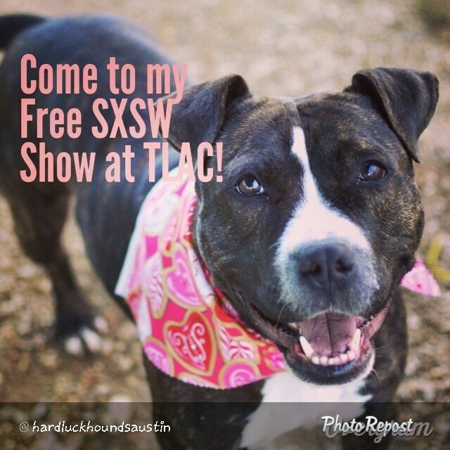 "By @hardluckhoundsaustin ""Pollydoodle is playing her #CutiePatoodie #SXSW show at TLAC (1156 Cesar Chavez in #ATX) all weekend, so come enjoy the great weather with her! #mutts #dogsofaustin #atxevents #brindles #muttsrule #pitties #staffies #lovebugs #smiles #flopdontcrop #winners #adoptme #cuties #sxsw2014 #austinanimalcenter"" via @PhotoRepost_app–posted by helpingshelterdogs on Instagram"