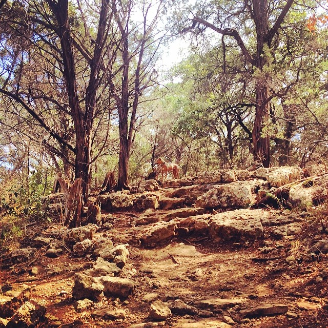 Etta comes out on top #pittie #thenakeddog #austin #hiking #boarding #training #atx #dogsofaustin #dogsofinstagram–posted by thenakeddog on Instagram