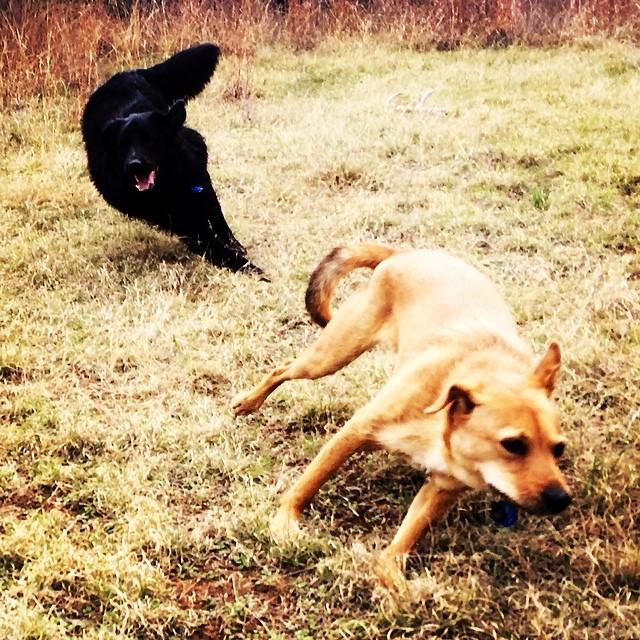 Here's the plan, you go left, I'll go right- break! #thenakeddog #austin #hiking #boarding #training #atx #dogsofaustin #dogsofinstagram–posted by thenakeddog on Instagram