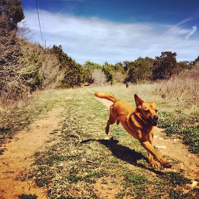 Flying goose #thenakeddog #austin #hiking #boarding #training #atx #dogsofaustin #dogsofinstagram–posted by thenakeddog on Instagram
