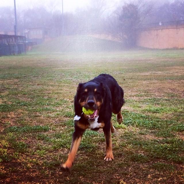 Ginny and the fog #thenakeddog #austin #hiking #boarding #training #atx #dogsofaustin #dogsofinstagram–posted by thenakeddog on Instagram