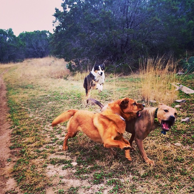 The girls telling Etta she needs to slow her roll #thenakeddog #austin #hiking #boarding #training #atx #dogsofaustin #dogsofinstagram–posted by thenakeddog on Instagram