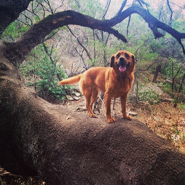 I dirty dog grooming self serve dogwash lucy in a tree thenakeddog austin hiking boarding training atx solutioingenieria Image collections