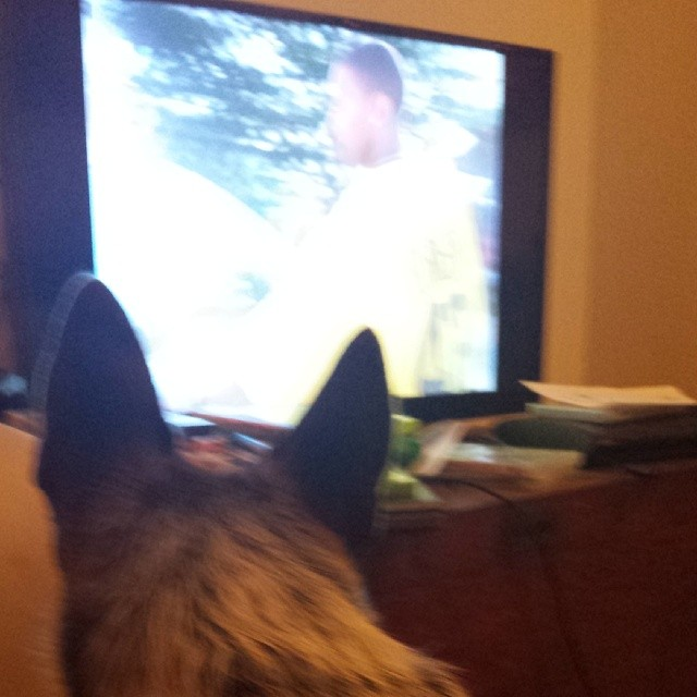 June enjoys the Wire just as mich as me :] #blueheeler #dailypuppy–posted by explodingsnowhorse on Instagram