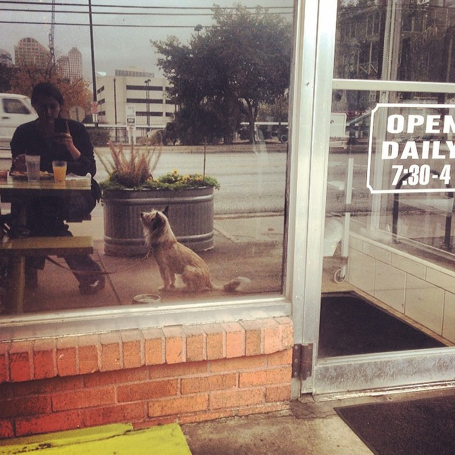 Reflection at breakfast after @lumerus ' bad night at work #dogfriendly #countercafe #woof #walkyourdogaustin #lamar #austin #Scruffy #terriersofinstagram–posted by thesparkydog on Instagram