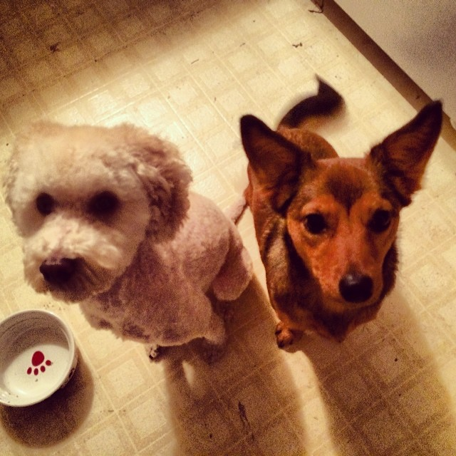 Dorothy & Baxter are requesting a cookie, please & thank you! #thenakeddog #austin #hiking #boarding #training #atx #dogsofaustin #dogsofinstagram–posted by thenakeddog on Instagram