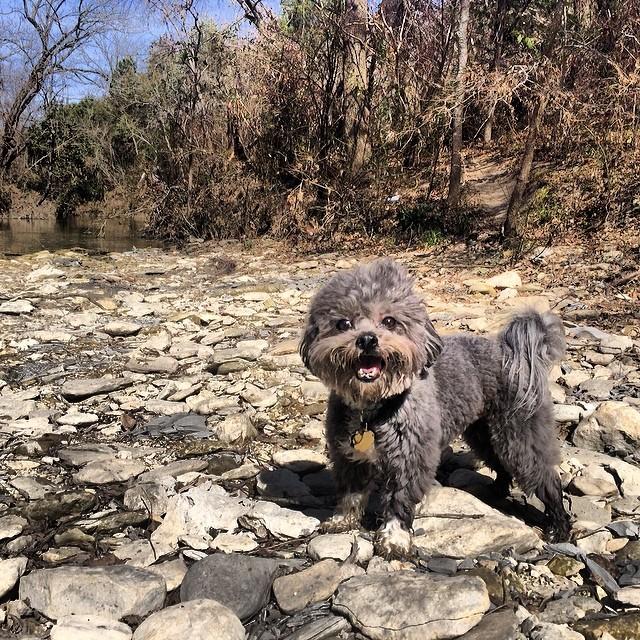 Frank on a hike #thenakeddog #austin #hiking #boarding #training #atx #dogsofaustin #dogsofinstagram–posted by thenakeddog on Instagram