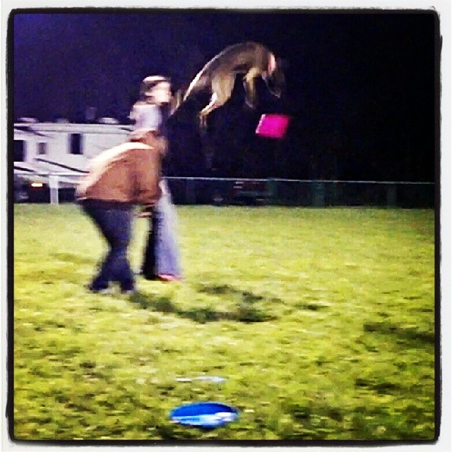 #jump #outerspace #frisbee #austin #atxk9 #atx #awesome #malinois #maligator #mal #shepherd #fly–posted by atx_k9 on Instagram