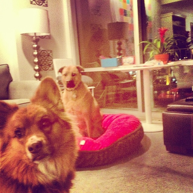 They share so nicely! #love #nuggets #cutest #dogbed #newtoys #work #kids #dogs–posted by pawticular on Instagram