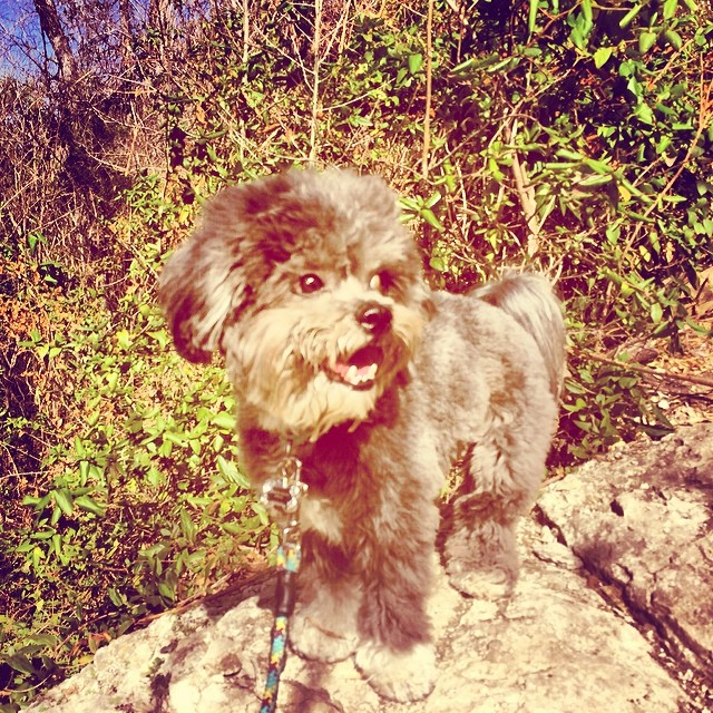Someone brought this stuffed animal to life then asked me to watch it for them. YES PLEASE! #thenakeddog #austin #hiking #boarding #training #atx #dogsofaustin #dogsofinstagram–posted by thenakeddog on Instagram