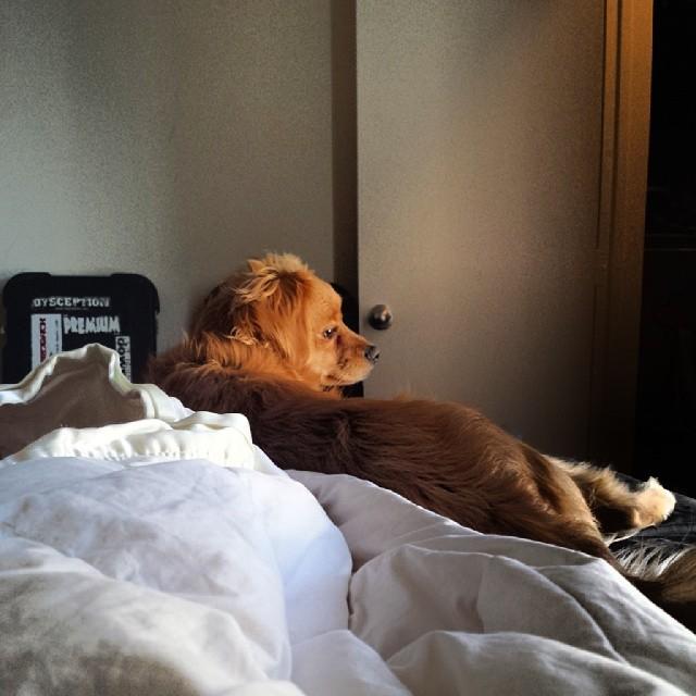 #chillingsohard #lovemydog –posted by megmucklebones1 on Instagram